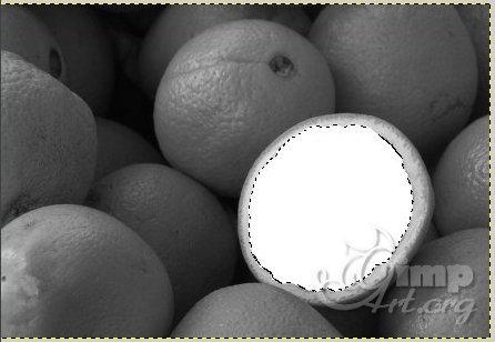 09_cherno-beloe-cvetnoe-foto